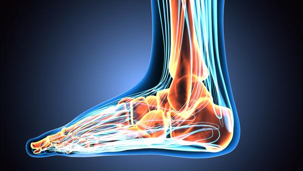 Fuß Anatomie - Podologie Ley Schwaigern
